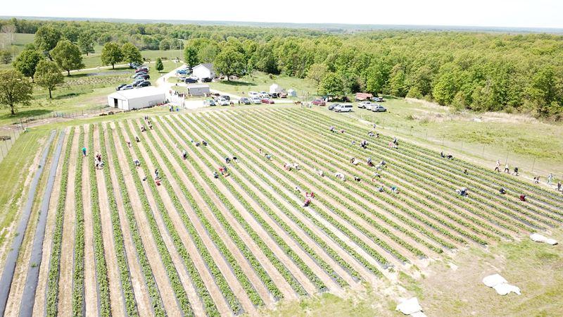 IronGate Berry Farm